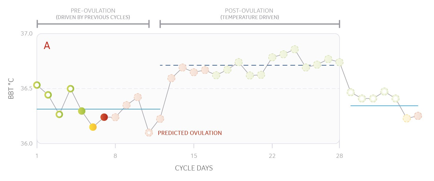 Ovulation Prediction A